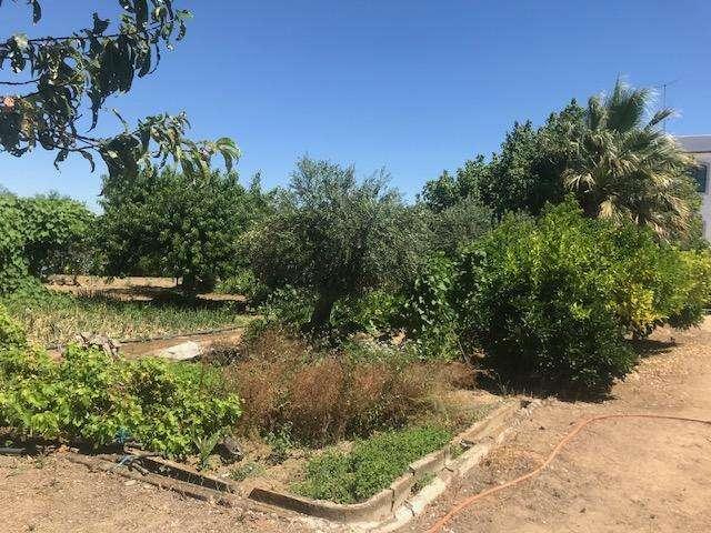 Quintas e herdades para comprar, Malagueira e Horta das Figueiras, Évora - Foto 21