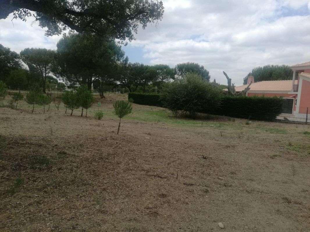 Terreno para comprar, Santo Estevão, Benavente, Santarém - Foto 3