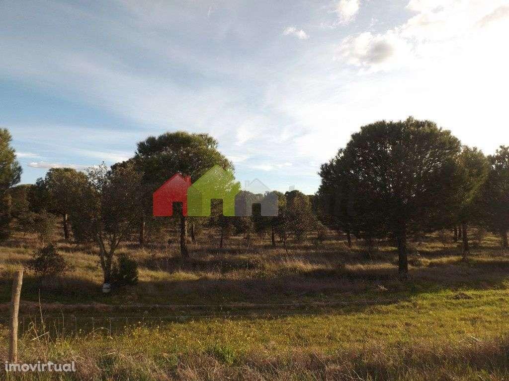 Quintas e herdades para comprar, São Matias, Beja - Foto 1