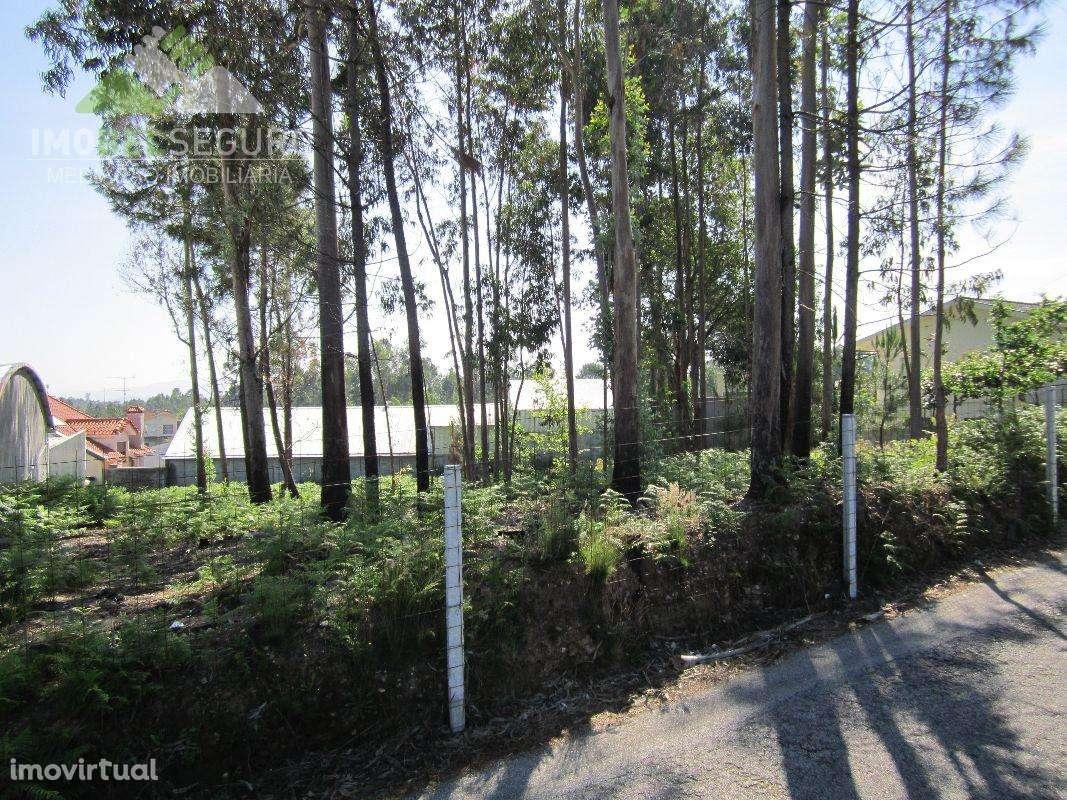 Terreno para comprar, Lobão, Gião, Louredo e Guisande, Aveiro - Foto 4