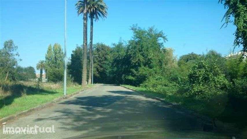 Terreno para comprar, Águeda e Borralha, Águeda, Aveiro - Foto 4