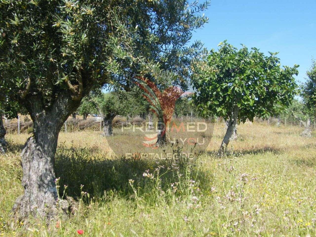 Quintas e herdades para comprar, Urra, Portalegre - Foto 5