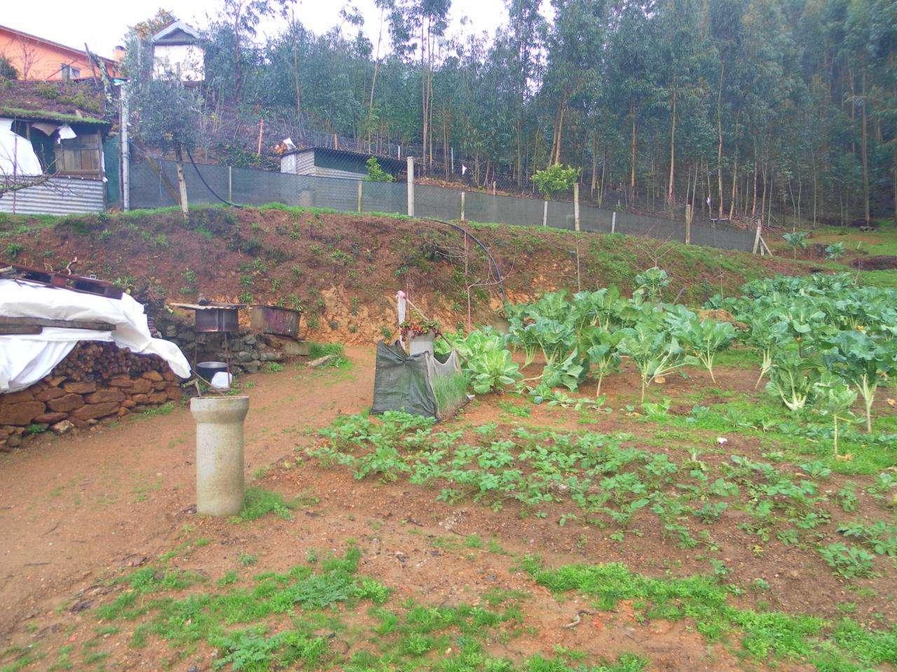 Terreno para comprar, Canedo, Vale e Vila Maior, Santa Maria da Feira, Aveiro - Foto 1