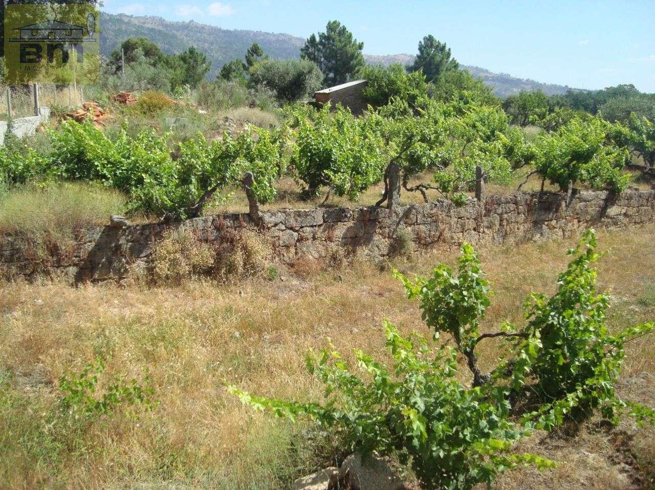 Quintas e herdades para comprar, Almaceda, Castelo Branco - Foto 23