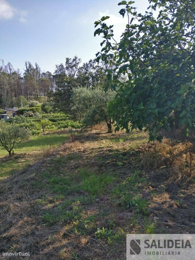 Terreno para comprar, Currelos, Papízios e Sobral, Viseu - Foto 14