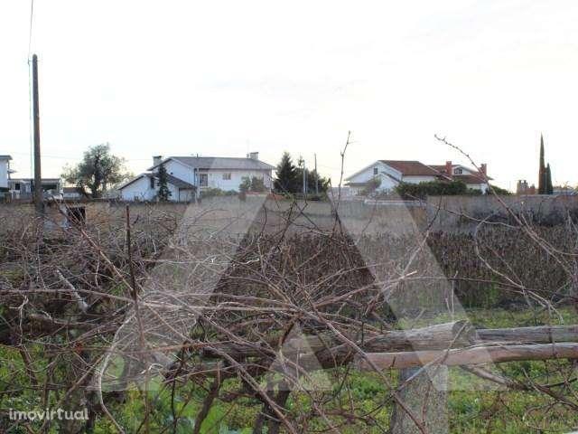 Terreno para comprar, Branca, Aveiro - Foto 3