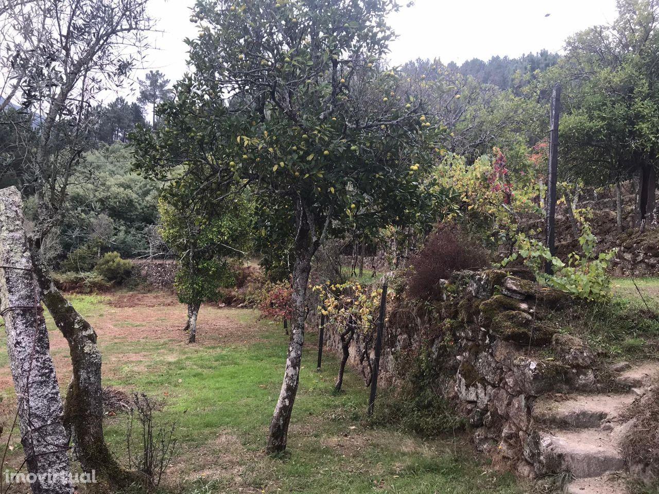 Quinta, Oliveira do Douro, Cinfães
