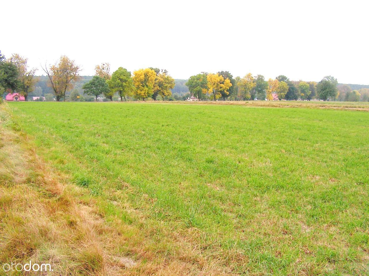 SKOTNIKI Pow17600m2 rolna dojazd asfaltowy