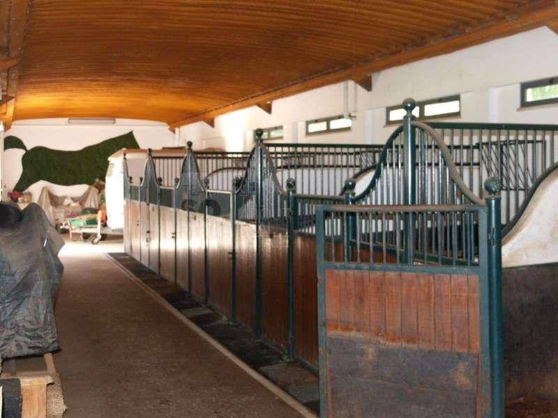 Quintas e herdades para comprar, Quinta do Anjo, Setúbal - Foto 22