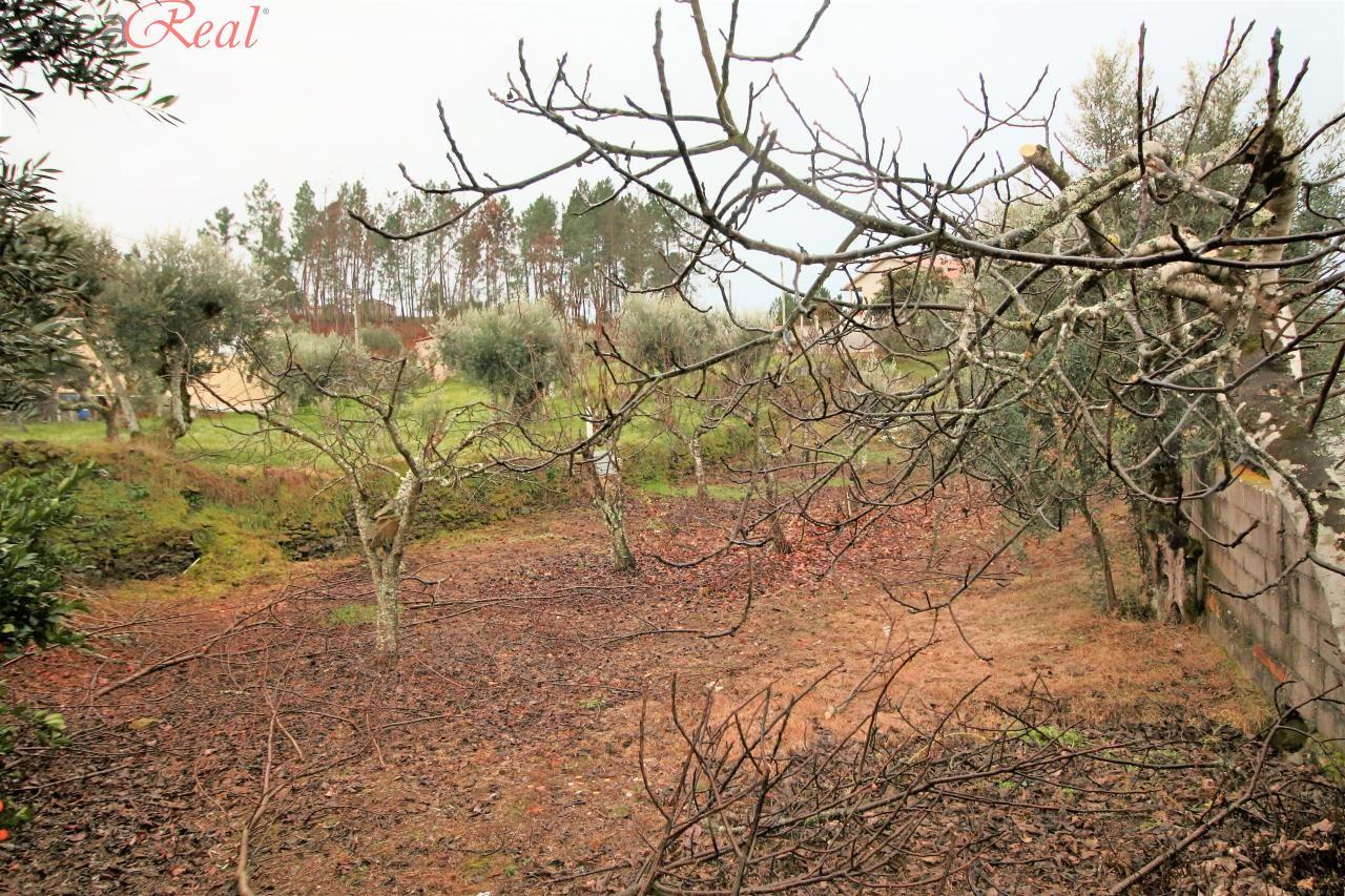 Quintas e herdades para comprar, Cumeada e Marmeleiro, Sertã, Castelo Branco - Foto 41