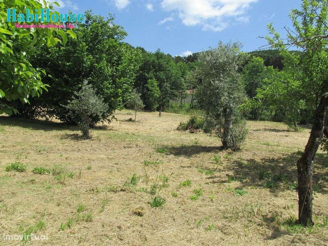 Quintas e herdades para comprar, Ranhados, Viseu - Foto 12