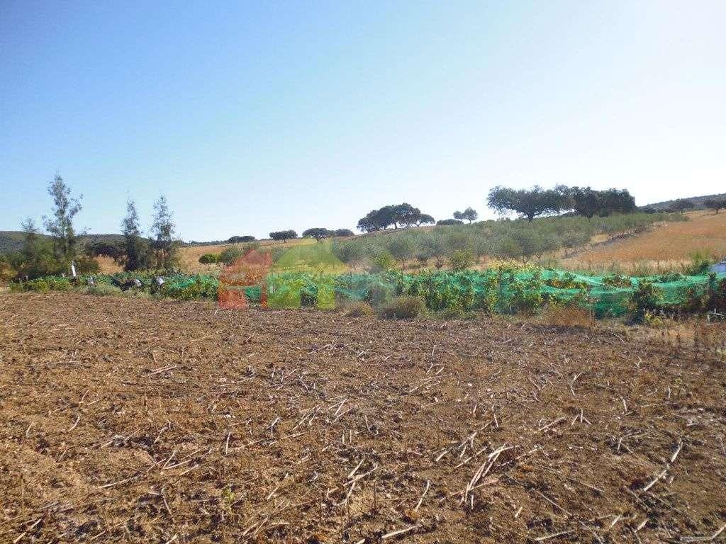 Quintas e herdades para comprar, Vila Verde de Ficalho, Beja - Foto 4