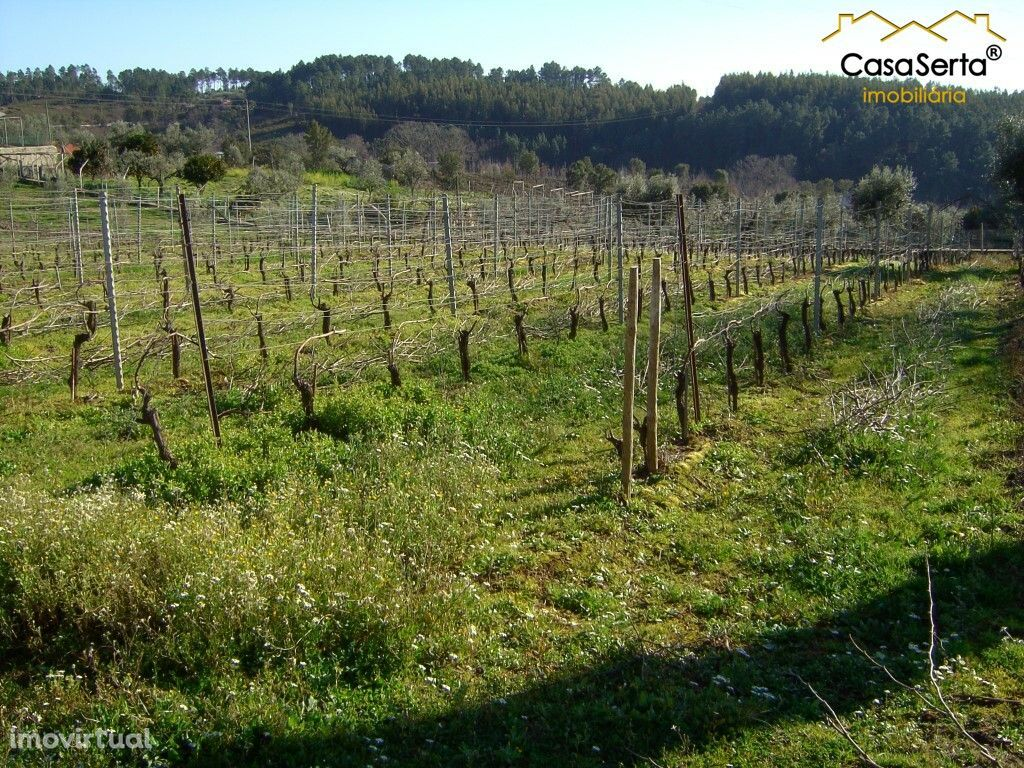 Terreno para comprar, Carvalhal, Sertã, Castelo Branco - Foto 1