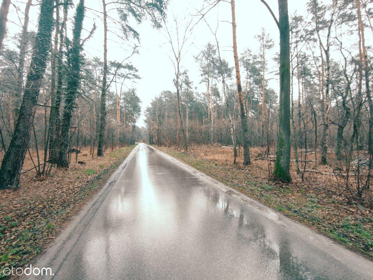 Leśna działka - 700 m do PKP MIĘDZYBORÓW