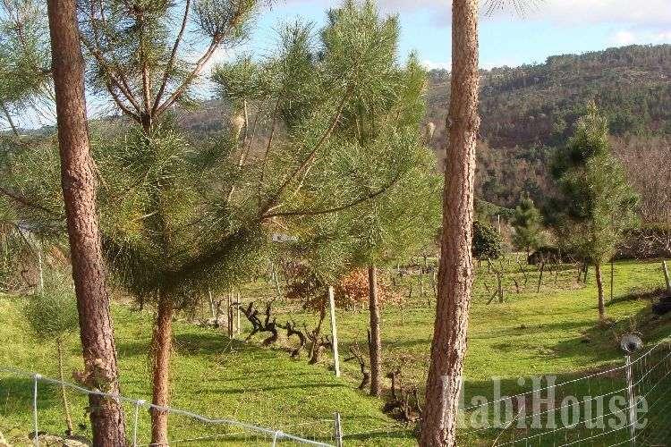 Quintas e herdades para comprar, Povolide, Viseu - Foto 8