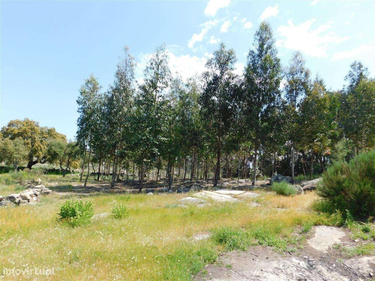 Terreno para comprar, Vale de Prazeres e Mata da Rainha, Castelo Branco - Foto 10