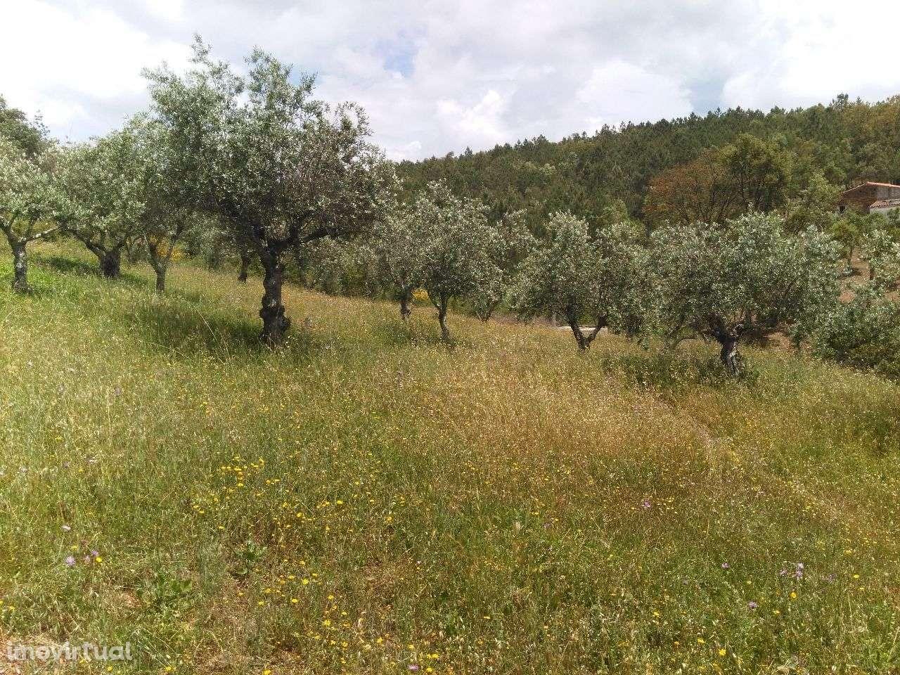Quintas e herdades para comprar, Alegrete, Portalegre - Foto 4