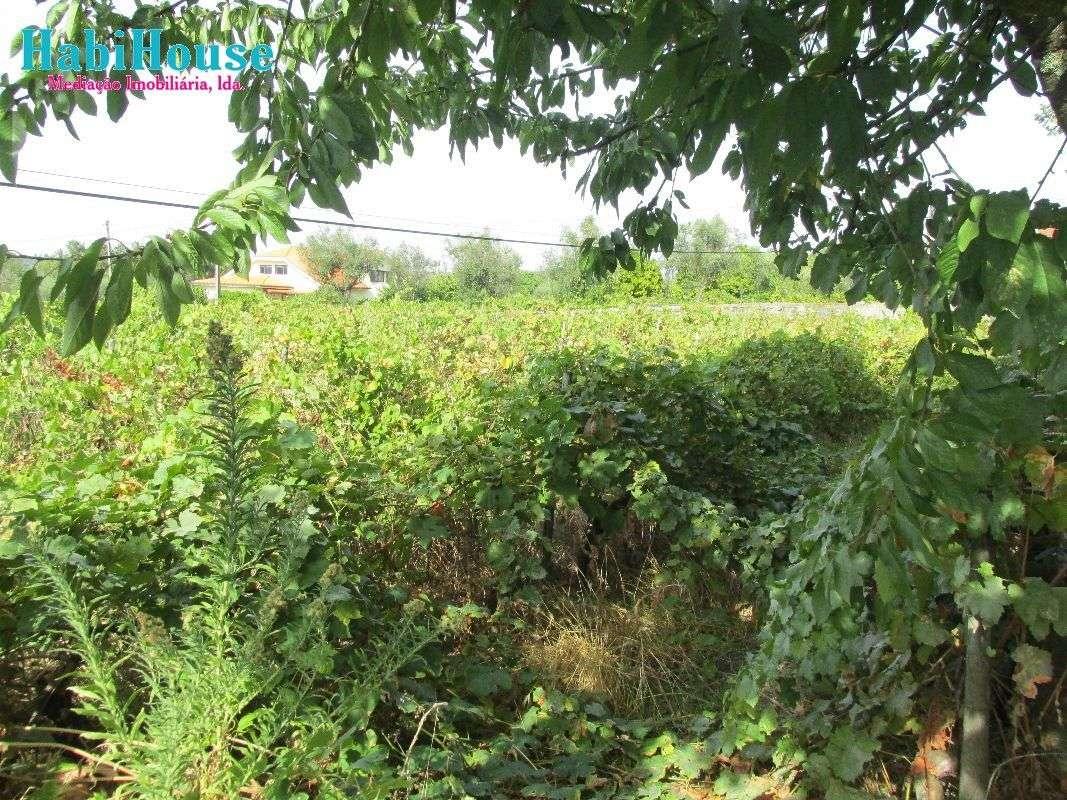 Quintas e herdades para comprar, Silgueiros, Viseu - Foto 12