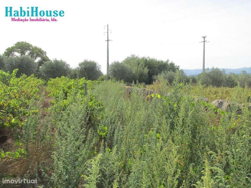 Quintas e herdades para comprar, Silgueiros, Viseu - Foto 15