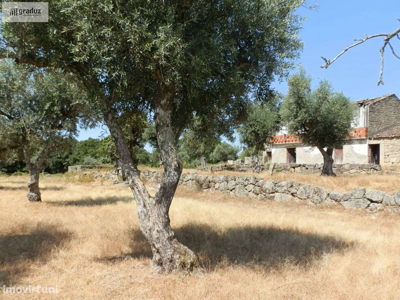 Quintas e herdades para comprar, Louriçal do Campo, Castelo Branco - Foto 27