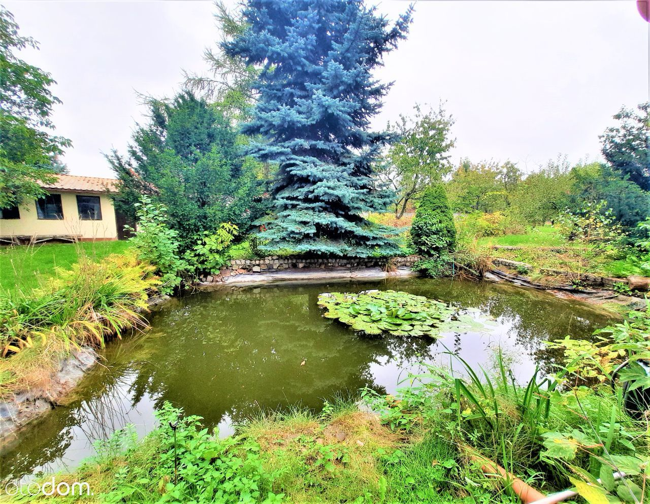 Wolnostojący Dom z sadem ,lasem, wodnym oczkiem