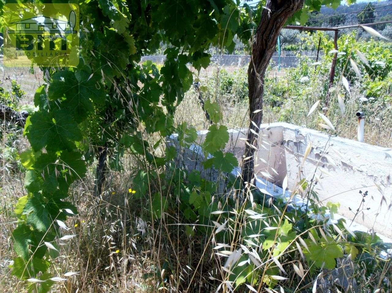 Quintas e herdades para comprar, Alcains, Castelo Branco - Foto 21