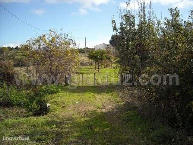 Terreno para comprar, Almaceda, Castelo Branco - Foto 10