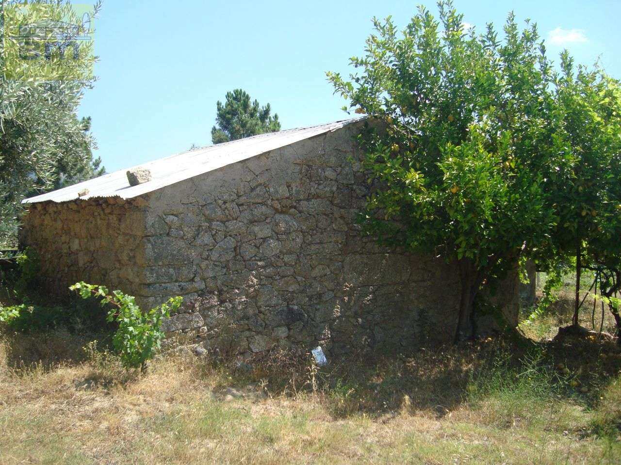Quintas e herdades para comprar, Almaceda, Castelo Branco - Foto 40