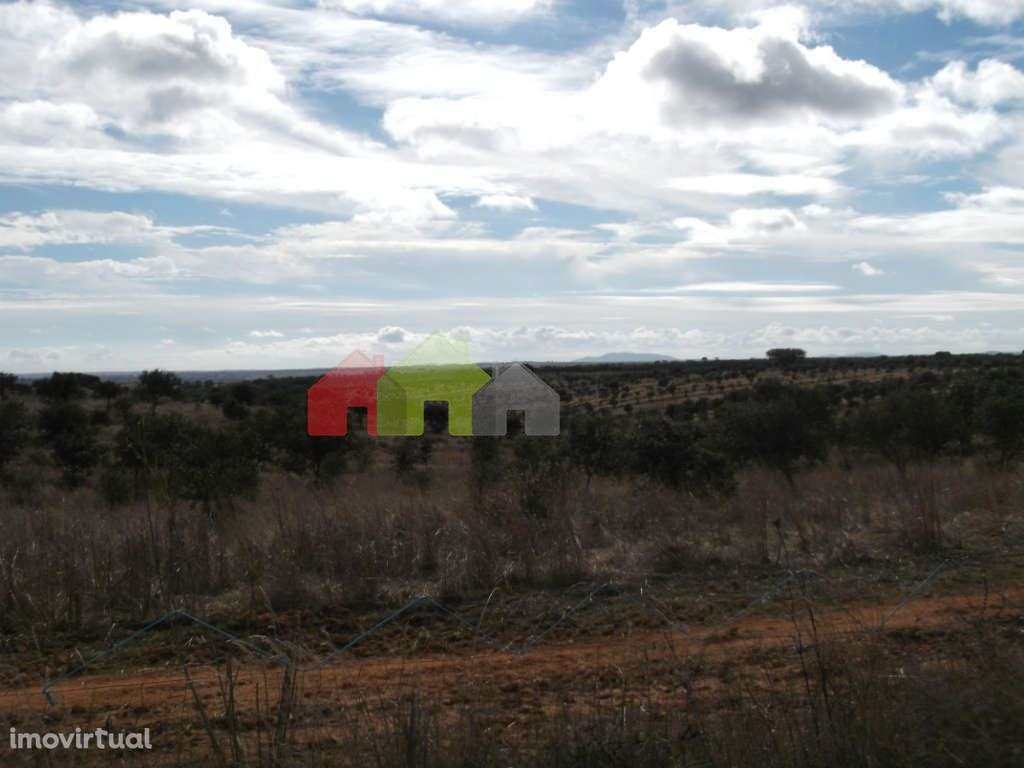 Quintas e herdades para comprar, Albernoa e Trindade, Beja - Foto 7
