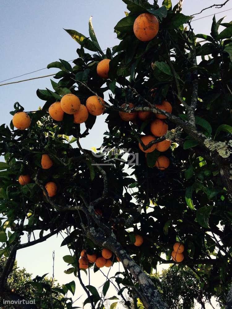 Quintas e herdades para comprar, Ereira e Lapa, Cartaxo, Santarém - Foto 8
