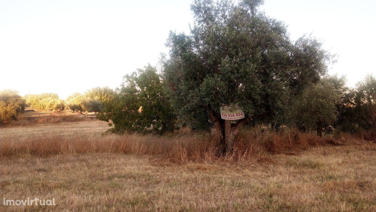 Terreno agrícola p/ constru contruir uma arrecadação perto de Tomar