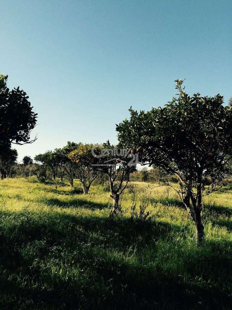 Quintas e herdades para comprar, Ereira e Lapa, Cartaxo, Santarém - Foto 6