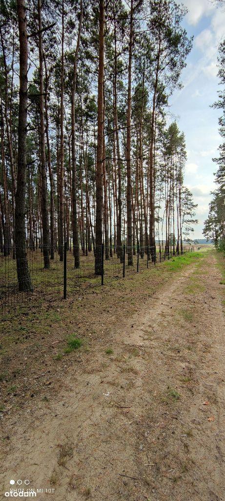 Atrakcyjna działka z lasem