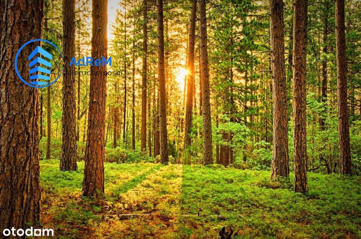 Działka leśna w gminie Mońki