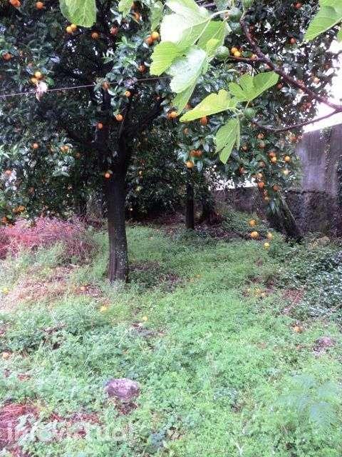 Quintas e herdades para comprar, Montaria, Viana do Castelo - Foto 5
