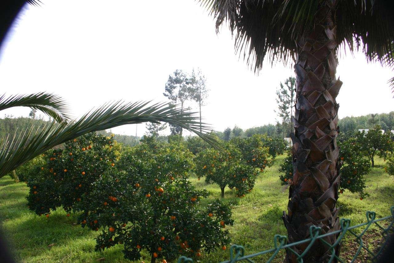 Quintas e herdades para comprar, Praia do Ribatejo, Santarém - Foto 29