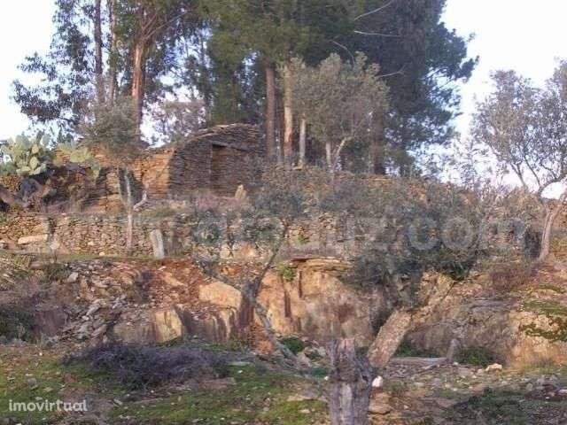 Terreno para comprar, Almaceda, Castelo Branco - Foto 2