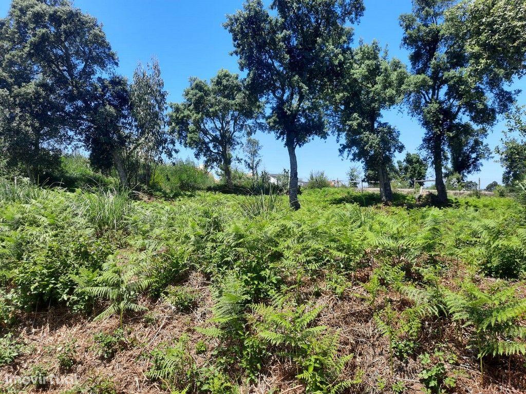 Lote terreno urbano para construção de Moradia (V363-3PL)