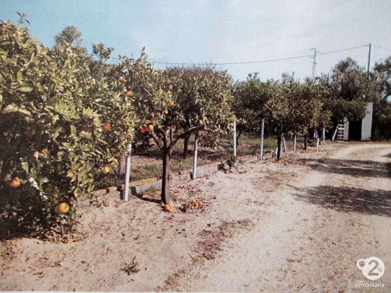 Quintas e herdades para comprar, Palmela, Setúbal - Foto 6