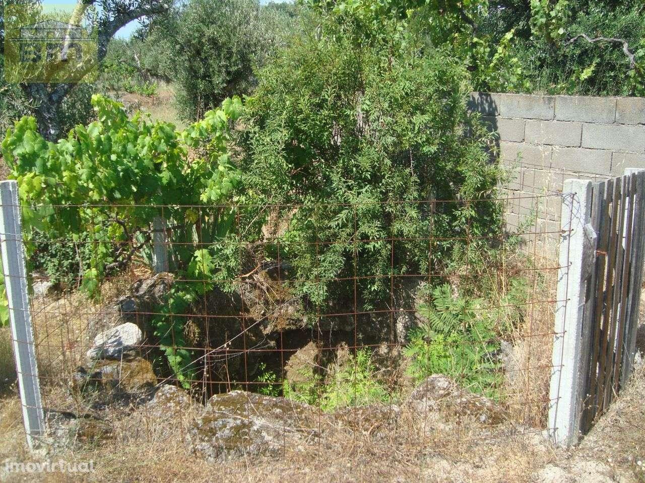 Quintas e herdades para comprar, Almaceda, Castelo Branco - Foto 34