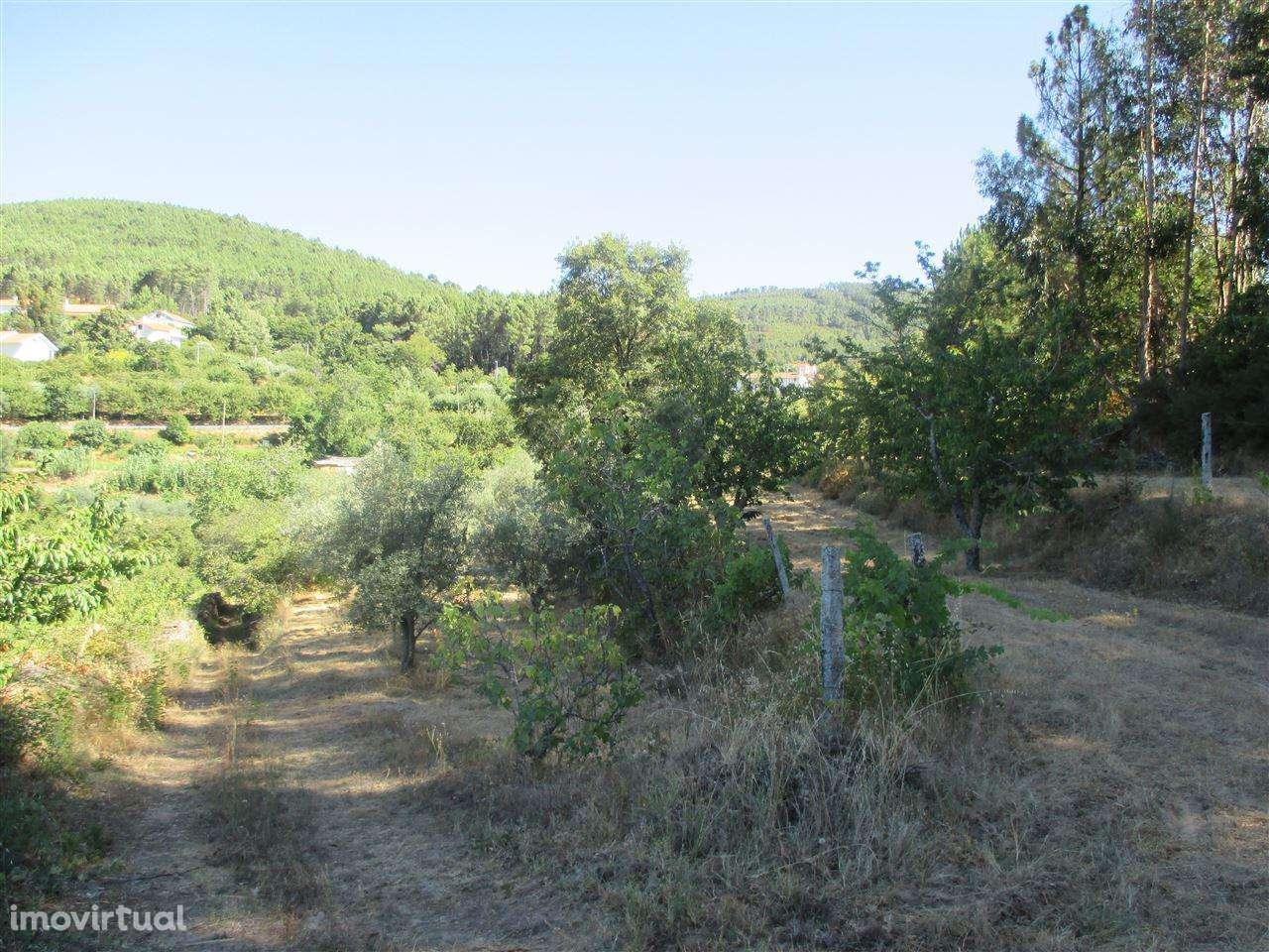 Terreno para comprar, Alcaide, Castelo Branco - Foto 1