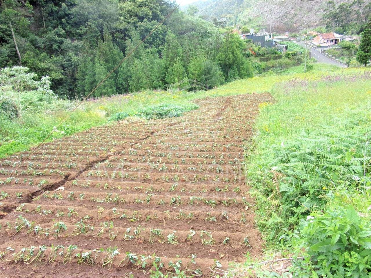 Moradia para comprar, Santo António da Serra, Ilha da Madeira - Foto 47