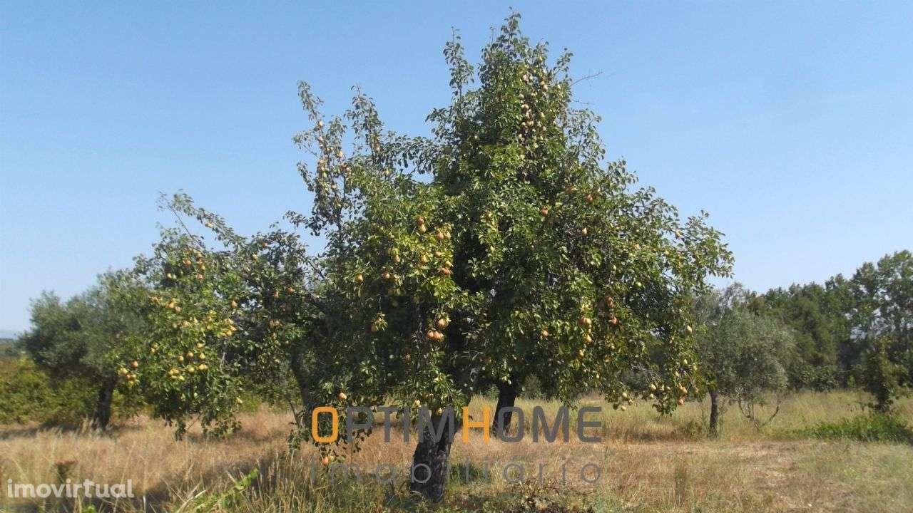 Quintas e herdades para comprar, Caria, Belmonte, Castelo Branco - Foto 30