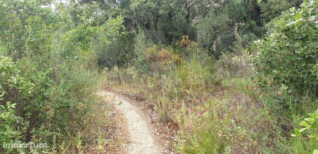 Terreno Rústico arborizado zona de POUSOS
