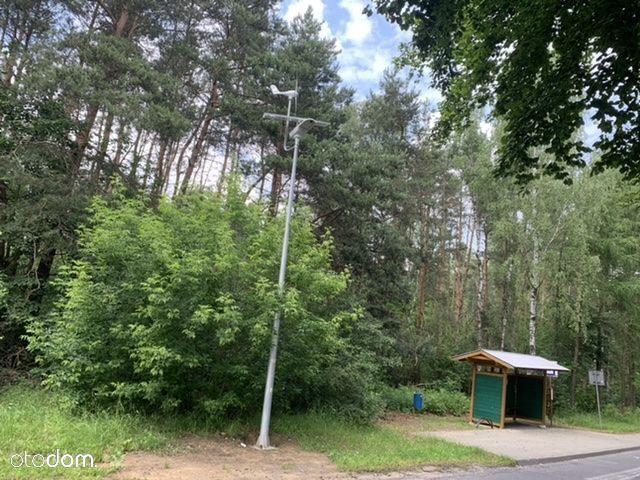 Duża działka leśna z możliwością zabudowy