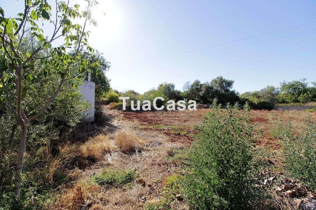 Quintas e herdades para comprar, Moncarapacho e Fuseta, Olhão, Faro - Foto 24