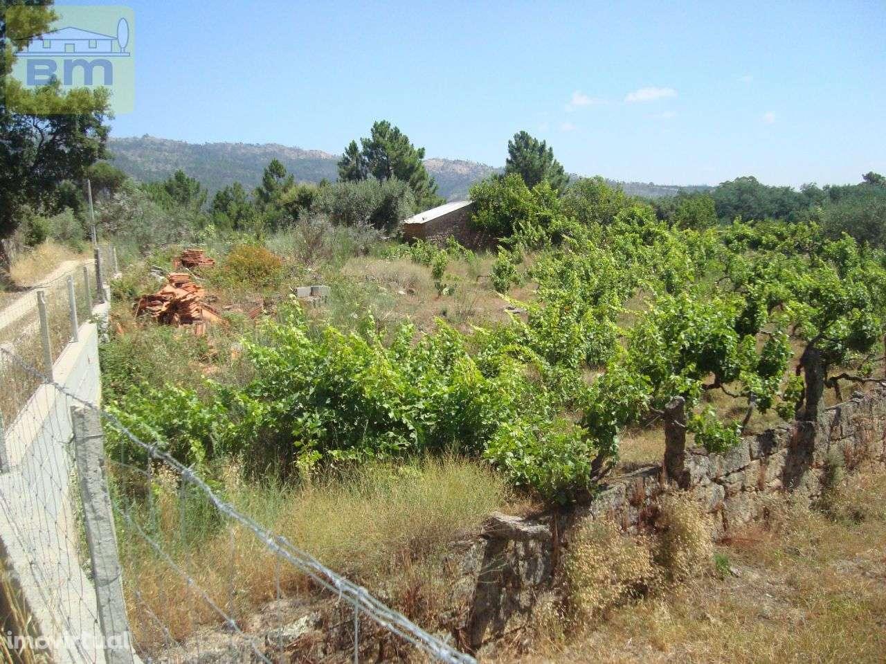 Quintas e herdades para comprar, Almaceda, Castelo Branco - Foto 51