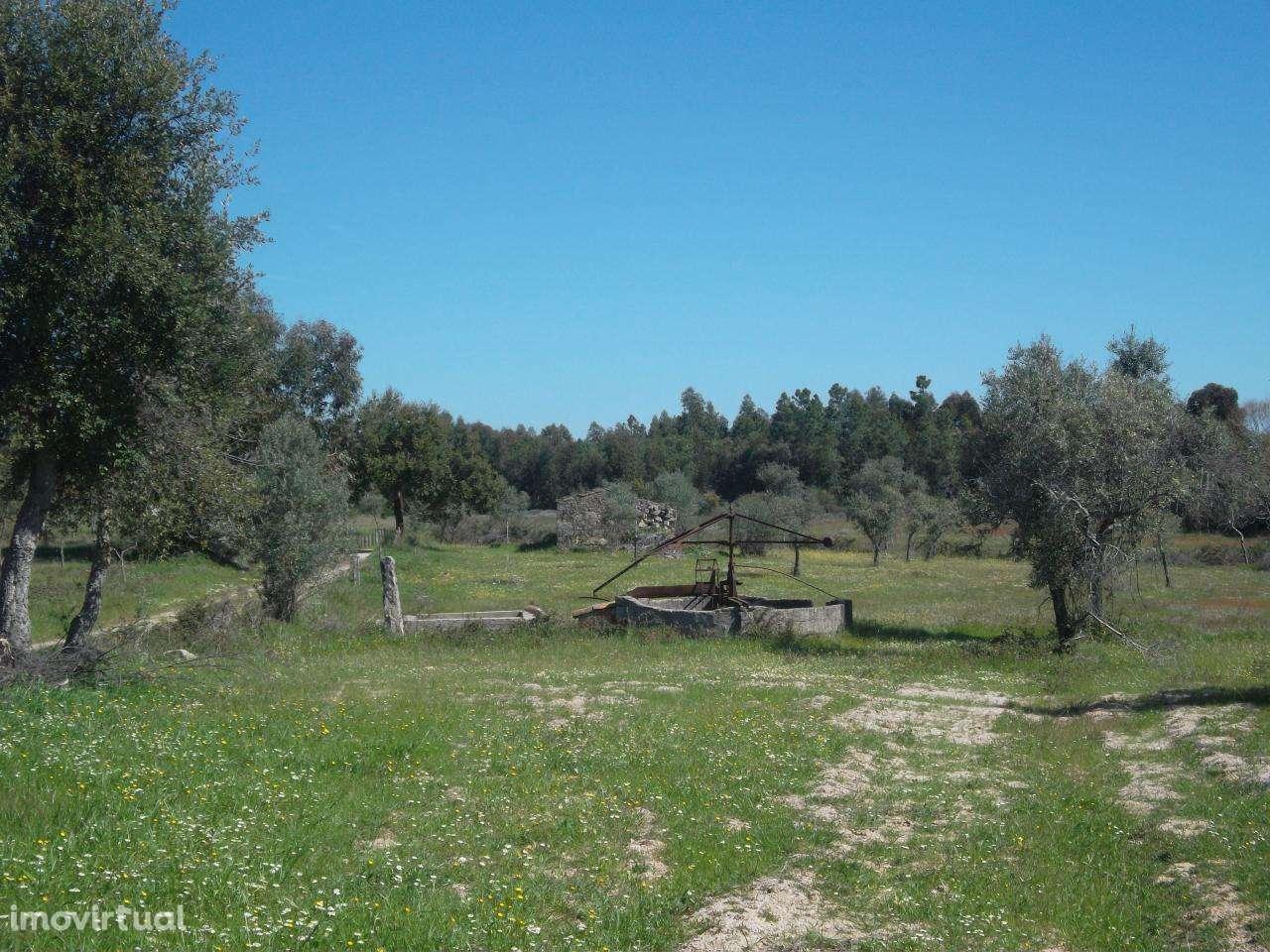 Quintas e herdades para comprar, Lardosa, Castelo Branco - Foto 5