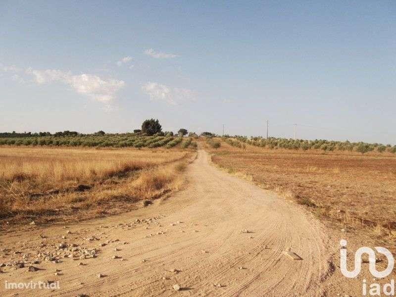 Terreno para comprar, Fronteira - Foto 13