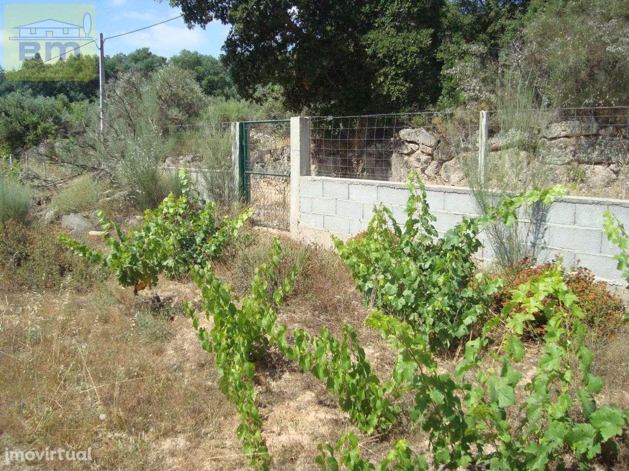 Quintas e herdades para comprar, Almaceda, Castelo Branco - Foto 47